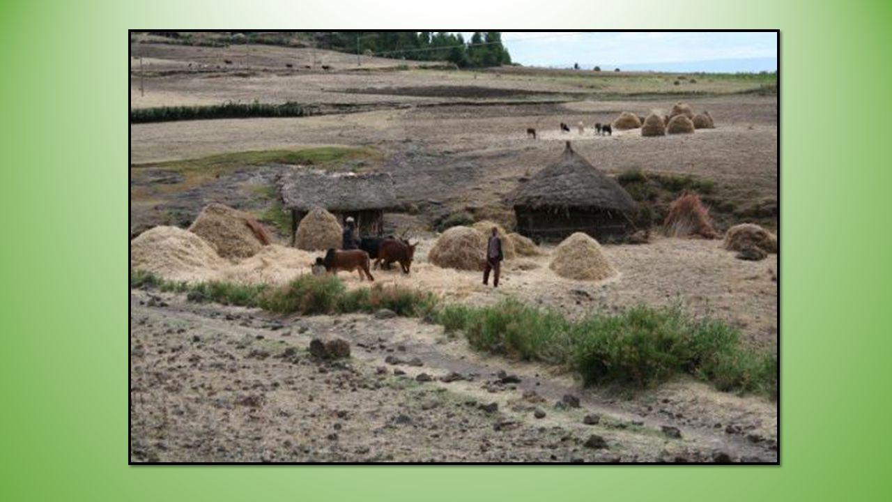Maison ancienne du village Histoire : En raison de lexpansion de lIslam, il était difficile pour les pèlerins chrétiens de se rendre à Jérusalem. Le r