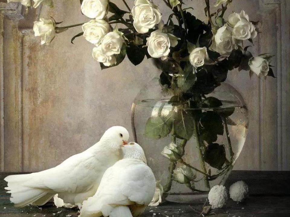 La gratitude est la plus belle fleur qui jaillit de lâme. - Sénèque