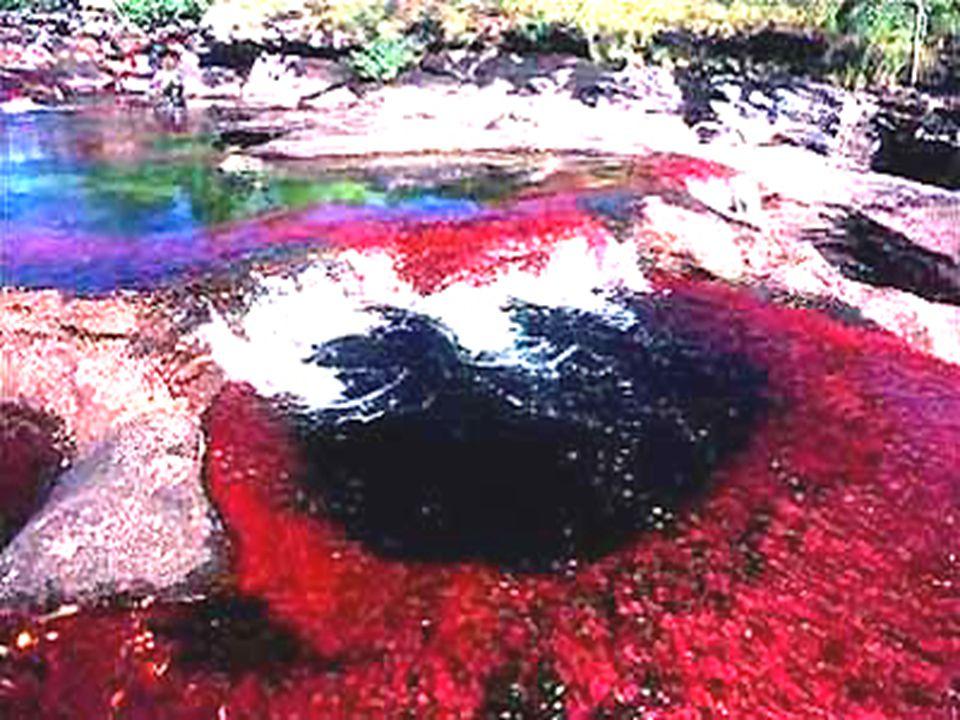 Mais pendant un bref laps de temps, entre les saisons s è ches et humides, lorsque le niveau d eau est juste à fleur d eau, les nombreuses vari é t é s d algues et de mousse font une d é monstration é clatante de couleurs.