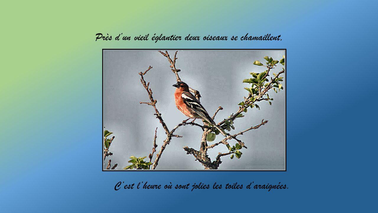Près dun vieil églantier deux oiseaux se chamaillent, Cest lheure où sont jolies les toiles daraignées.