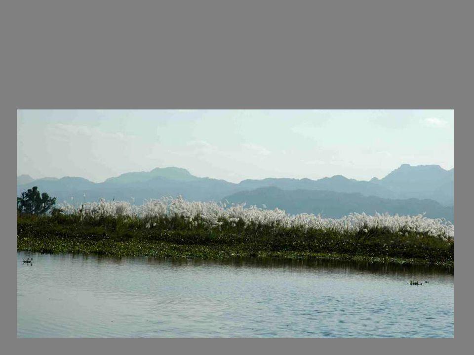 Une mer de nénuphars et autres plantes aquatiques: on se demande comment lhélice de la longue-queue se débrouille…..