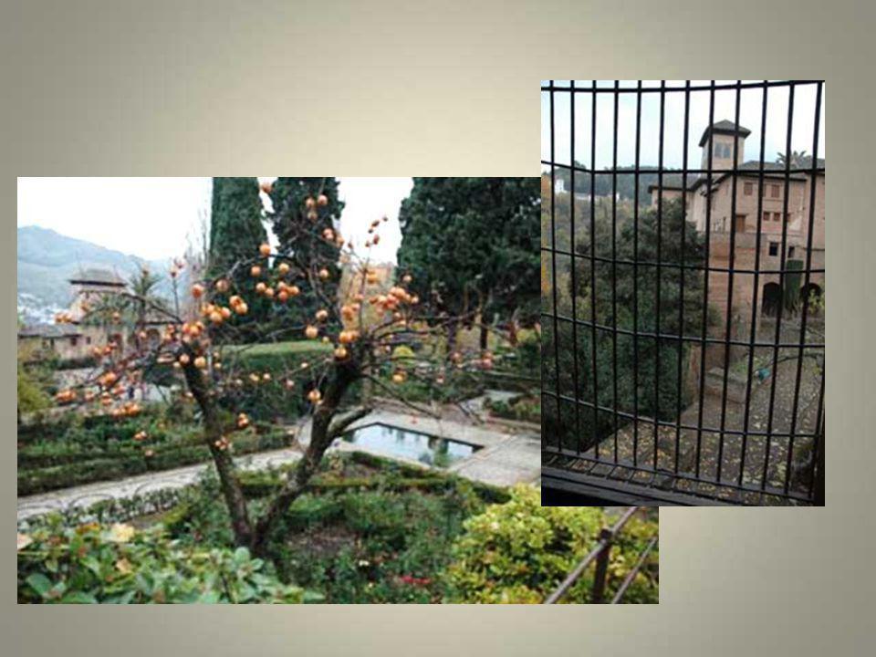 El Generalife est l'immense jardin qui se trouve à l'est de l'Alhambra. Dans ces jardins se trouve une flore exubérante : des cyprès, des orangers, de