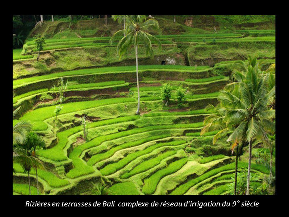 Rizières en terrasses de Bali complexe de réseau dirrigation du 9° siècle