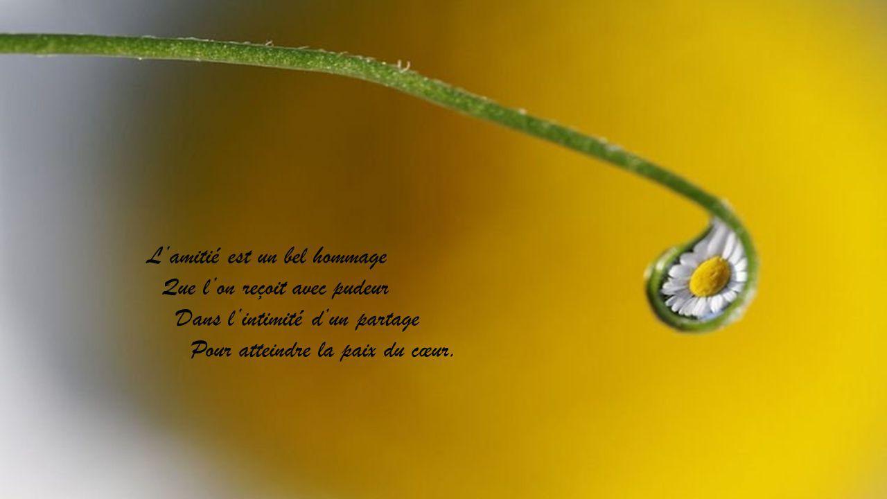 Lamitié est un bel hommage Que lon reçoit avec pudeur Dans lintimité dun partage Pour atteindre la paix du cœur.