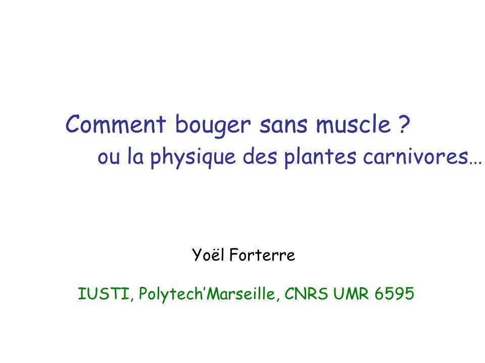 Comment bouger sans muscle ? ou la physique des plantes carnivores… Yoël Forterre IUSTI, PolytechMarseille, CNRS UMR 6595