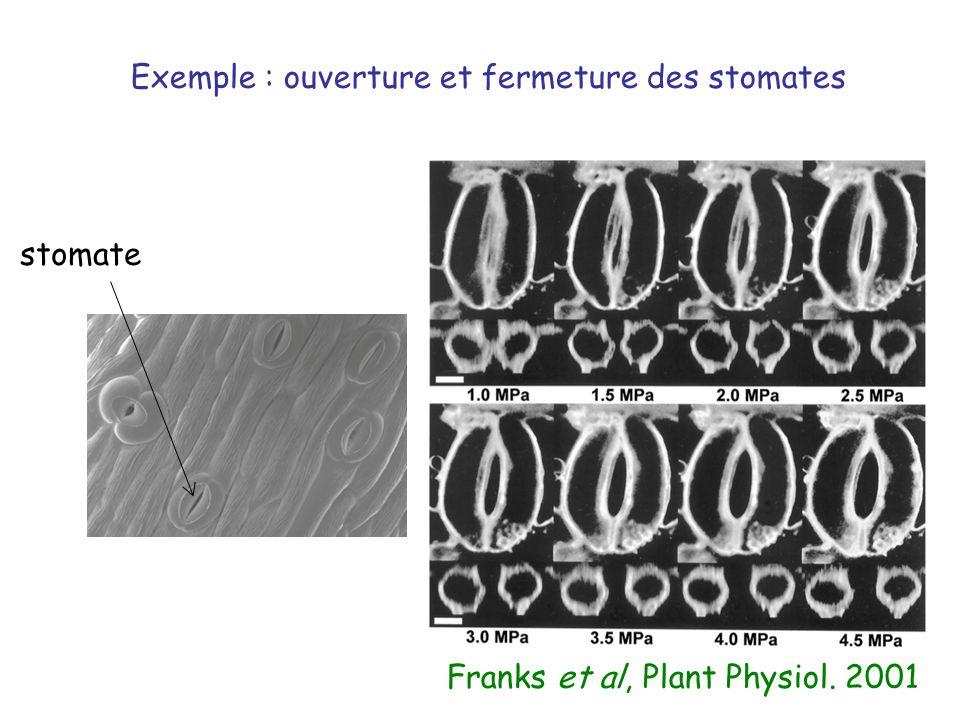 Franks et al, Plant Physiol. 2001 Exemple : ouverture et fermeture des stomates stomate