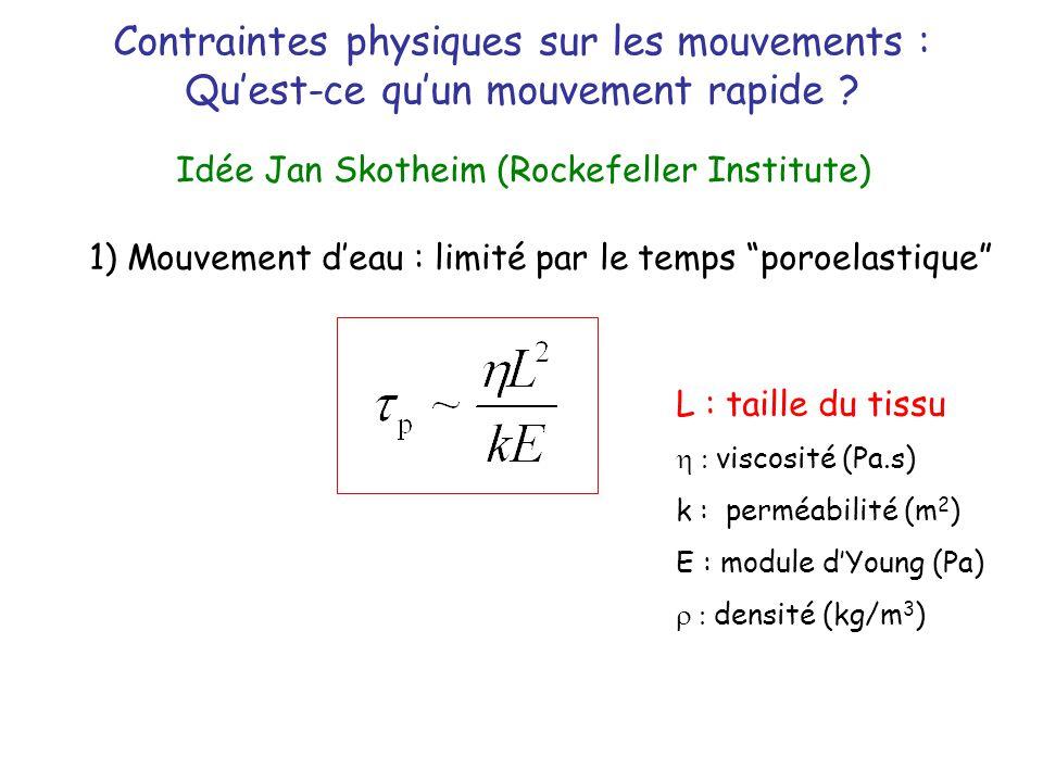Contraintes physiques sur les mouvements : Quest-ce quun mouvement rapide ? Idée Jan Skotheim (Rockefeller Institute) 1) Mouvement deau : limité par l