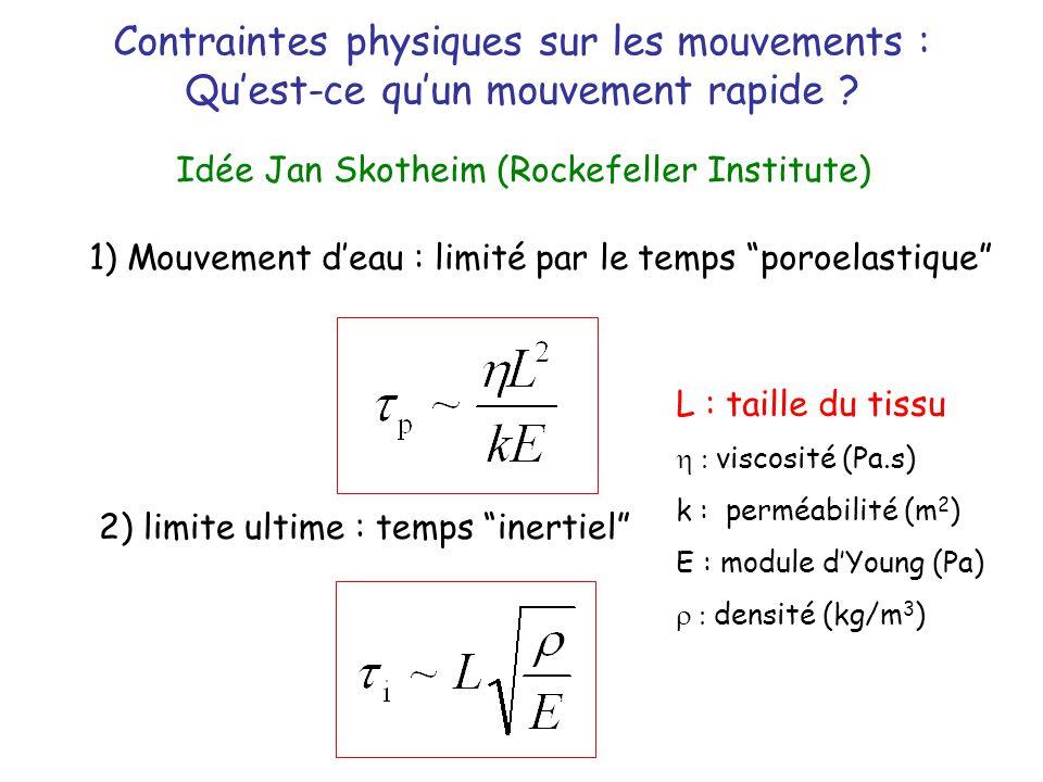 Contraintes physiques sur les mouvements : Quest-ce quun mouvement rapide ? Idée Jan Skotheim (Rockefeller Institute) 2) limite ultime : temps inertie
