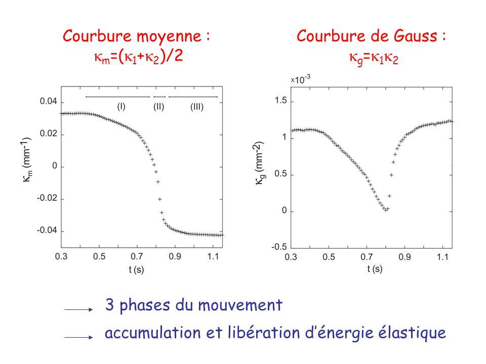 Courbure moyenne : m =( 1 + 2 )/2 Courbure de Gauss : g = 1 2 3 phases du mouvement accumulation et libération dénergie élastique