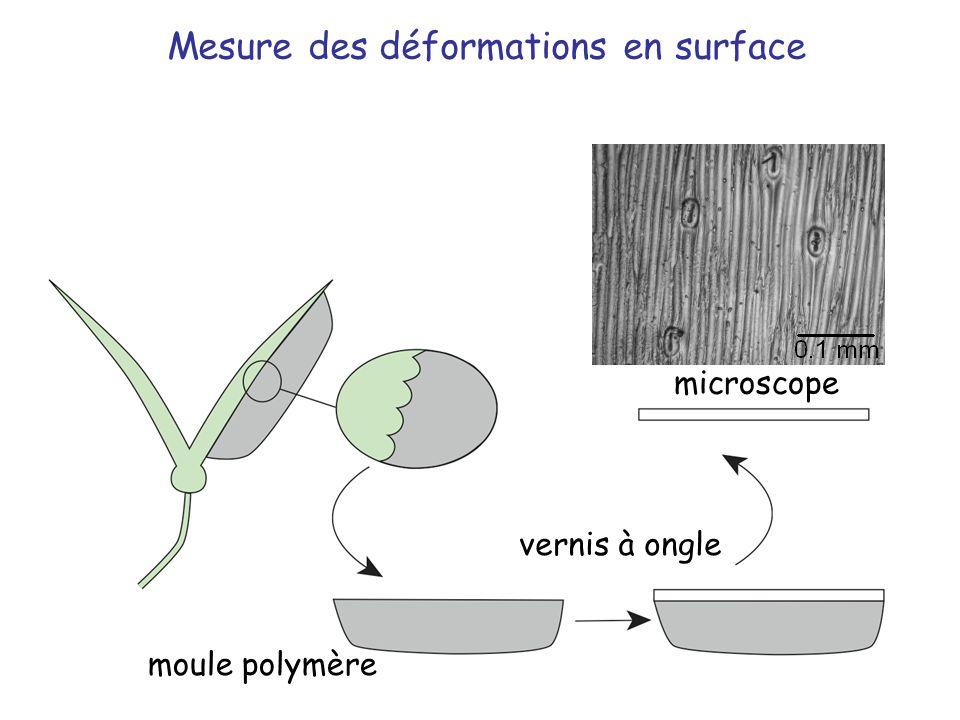moule polymère vernis à ongle microscope Mesure des déformations en surface