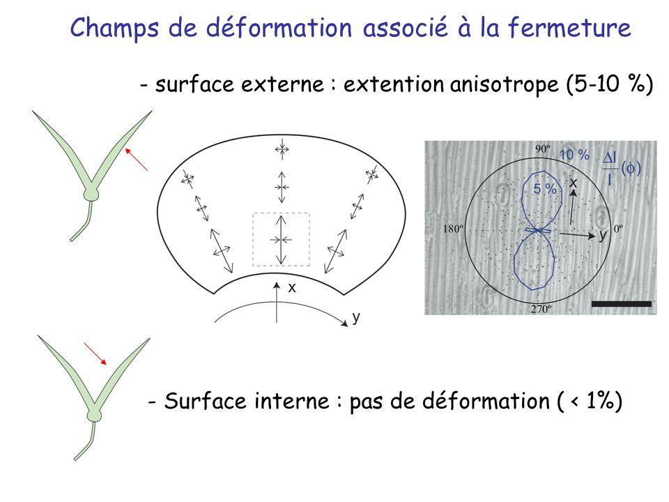- Surface interne : pas de déformation ( < 1%) - surface externe : extention anisotrope (5-10 %) Champs de déformation associé à la fermeture