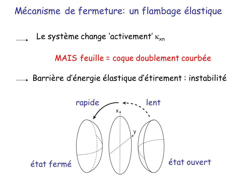 Mécanisme de fermeture: un flambage élastique Le système change activement xn MAIS feuille = coque doublement courbée Barrière dénergie élastique déti