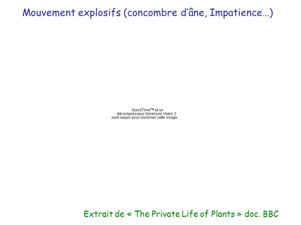 Extrait de « The Private Life of Plants » doc. BBC Mouvement explosifs (concombre dâne, Impatience…)