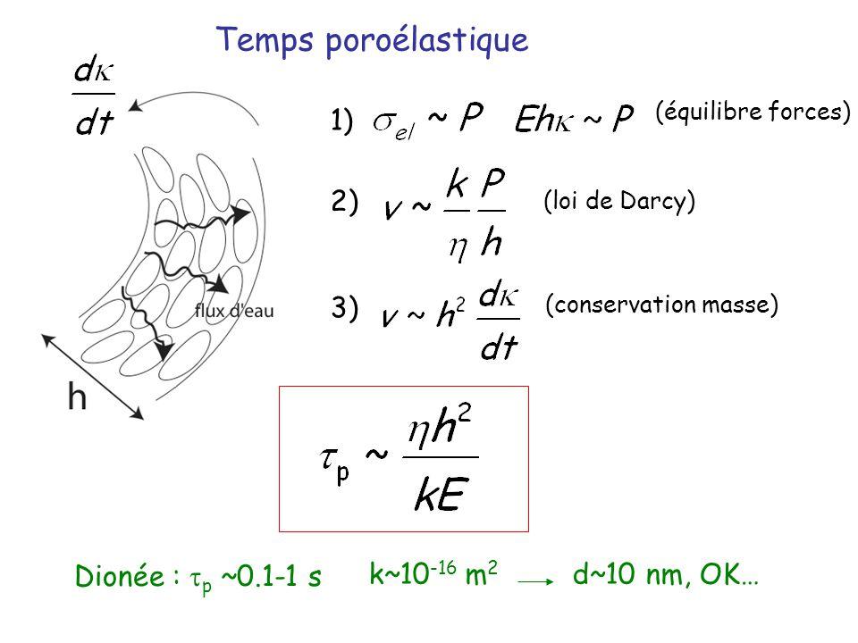 Temps poroélastique (équilibre forces) (conservation masse) (loi de Darcy) 1) 2) 3) k~10 -16 m 2 d~10 nm, OK… Dionée : p ~0.1-1 s