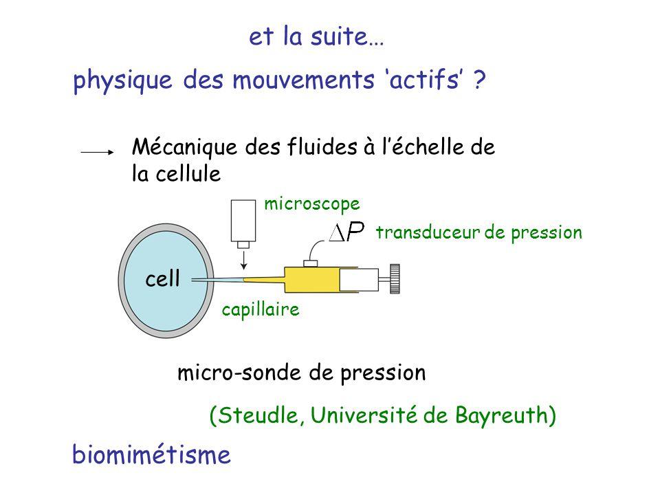 physique des mouvements actifs ? (Steudle, Université de Bayreuth) Mécanique des fluides à léchelle de la cellule et la suite… cell micro-sonde de pre