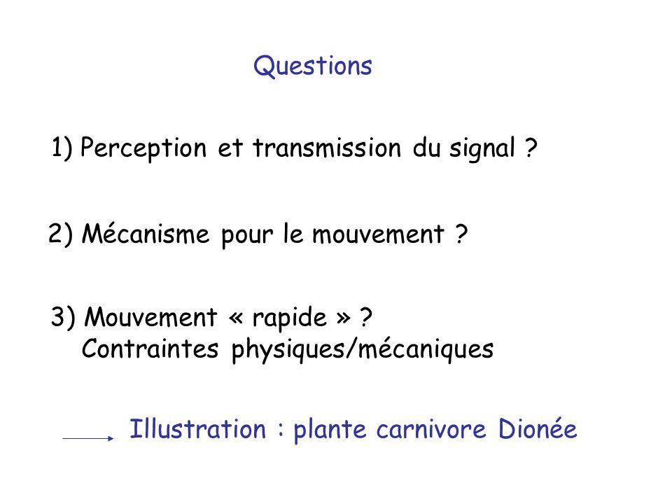 1) Perception et transmission du signal ? Questions 2) Mécanisme pour le mouvement ? 3) Mouvement « rapide » ? Contraintes physiques/mécaniques Illust
