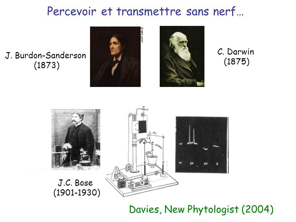 Percevoir et transmettre sans nerf… J. Burdon-Sanderson (1873) C. Darwin (1875) J.C. Bose (1901-1930) Davies, New Phytologist (2004)