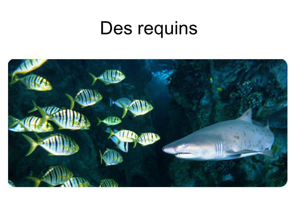 Des requins
