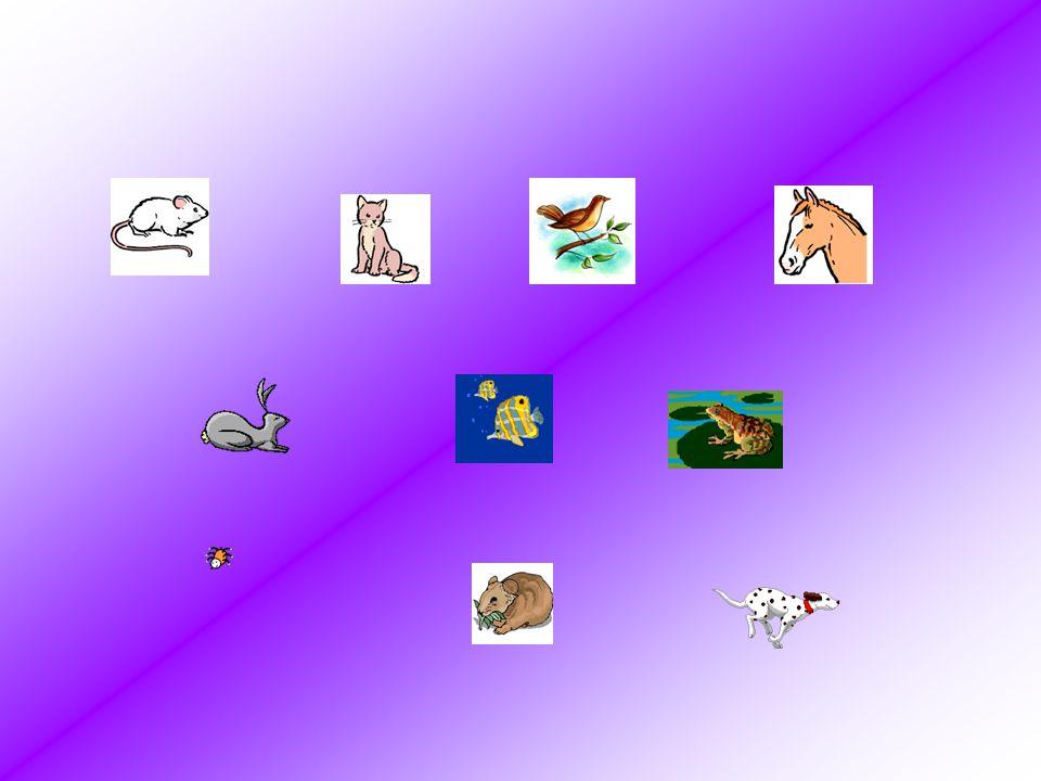 Ecriture 1 2 3 4 5 6 7 Jai un chien, je nai pas de cheval mais je voudrais une araignée.