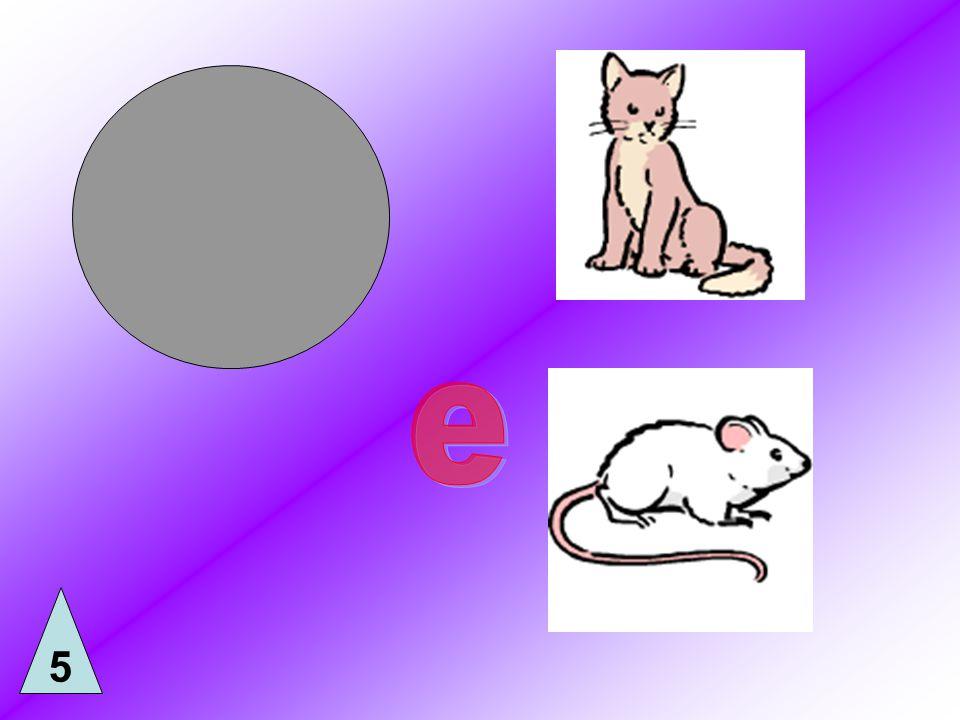 Quel animal préfères-tu.De quelle couleur est ton chat.
