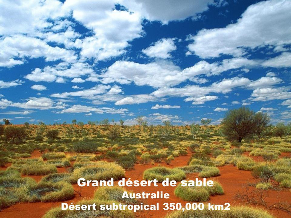 Désert de Chihuahua Mexique et États-Unis Désert subtropical 400,000 km2