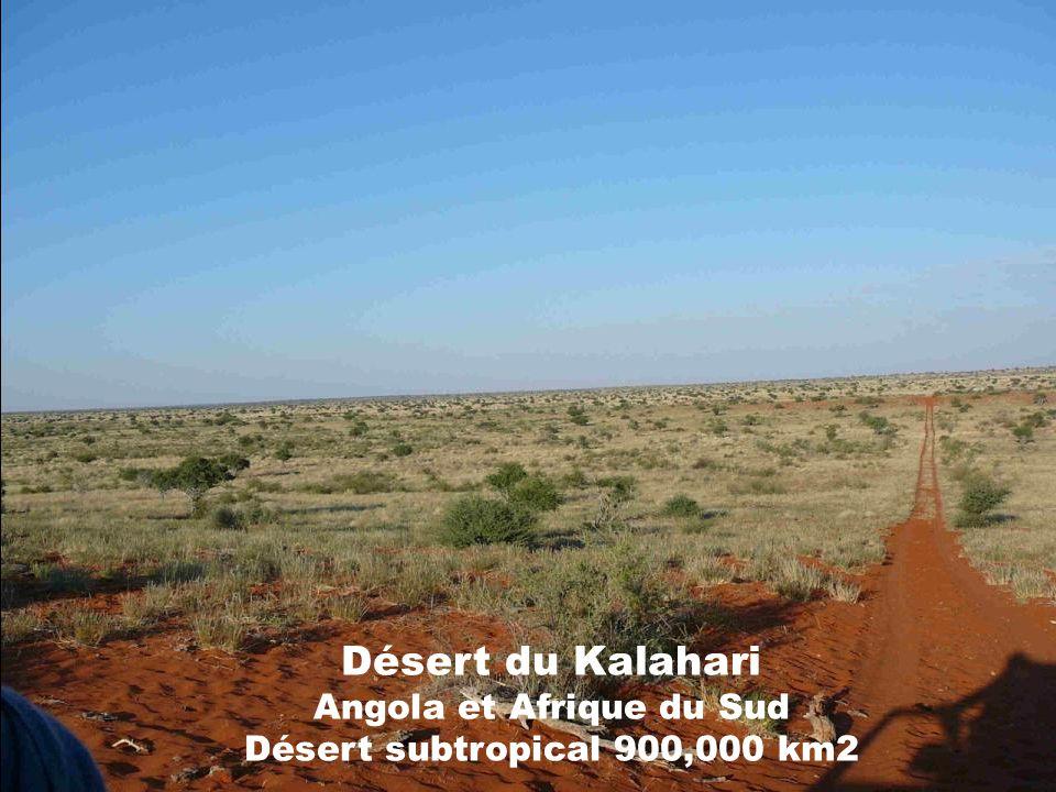 Désert de sel dUyumi Bolivie Un désert de sel ou salar est un lac plus ou moins temporaire et aux rives changeantes dont les sédiments sont essentiellement constitués par des sels.