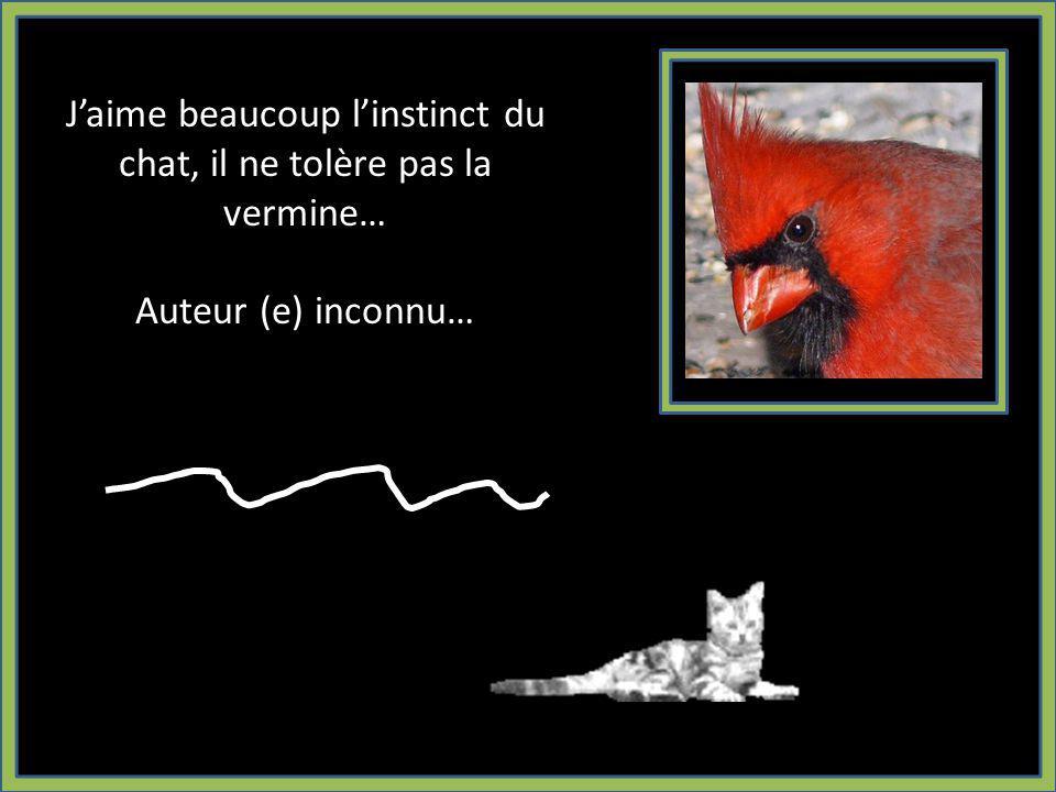 Jaime beaucoup linstinct du chat, il ne tolère pas la vermine… Auteur (e) inconnu…