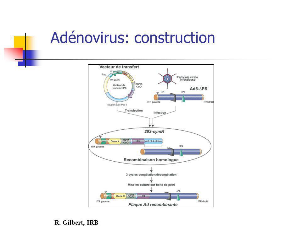 Adénovirus: construction R. Gilbert, IRB