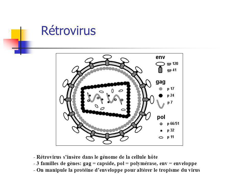 Rétrovirus - Rétrovirus sinsère dans le génome de la cellule hôte - 3 familles de gènes: gag = capside, pol = polymérase, env = enveloppe - On manipule la protéine denveloppe pour altérer le tropisme du virus