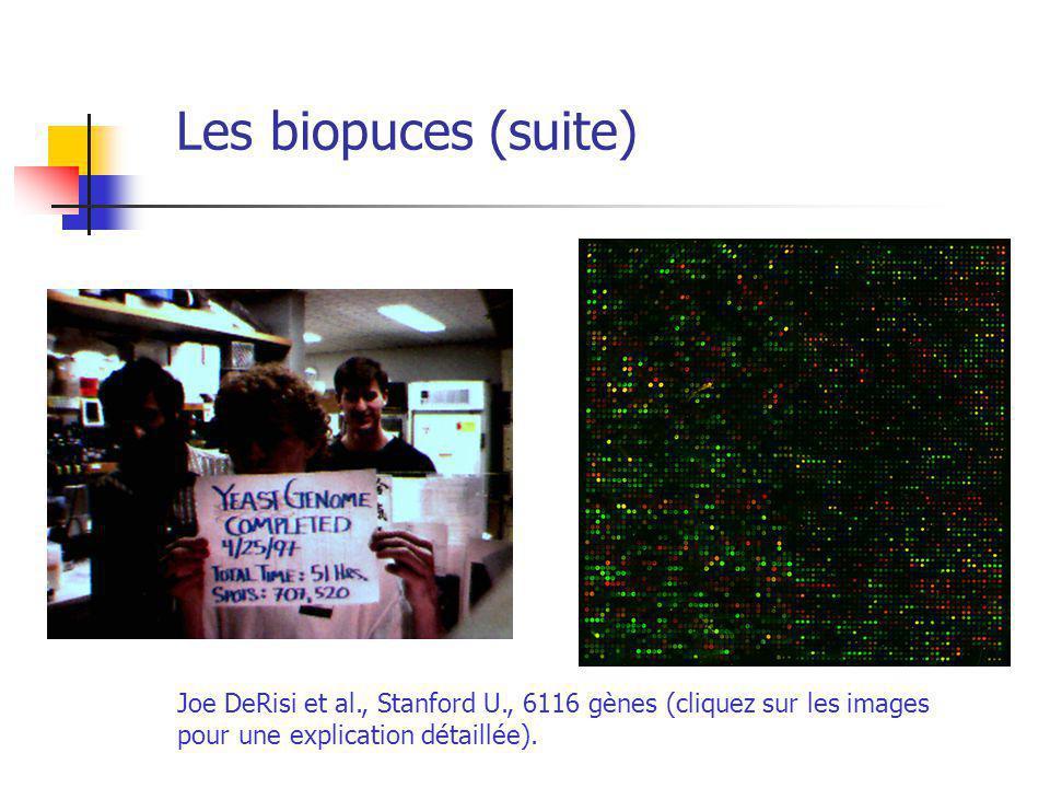 Les biopuces (suite) Joe DeRisi et al., Stanford U., 6116 gènes (cliquez sur les images pour une explication détaillée).