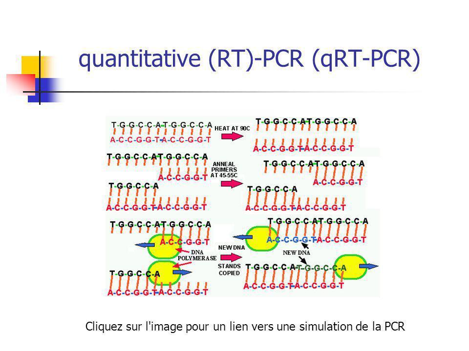 quantitative (RT)-PCR (qRT-PCR) Cliquez sur l image pour un lien vers une simulation de la PCR