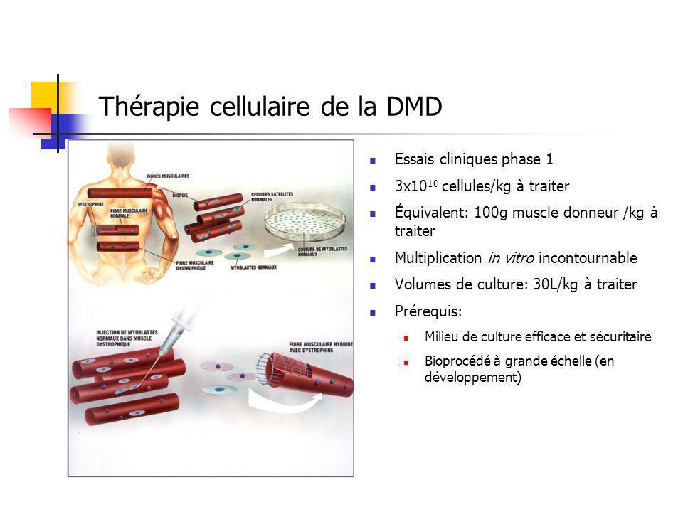Thérapie cellulaire de la DMD Essais cliniques phase 1 3x10 10 cellules/kg à traiter Équivalent: 100g muscle donneur /kg à traiter Multiplication in vitro incontournable Volumes de culture: 30L/kg à traiter Prérequis: Milieu de culture efficace et sécuritaire Bioprocédé à grande échelle (en développement)