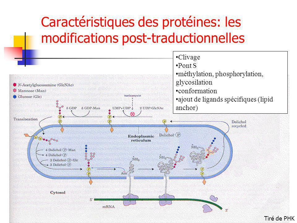 Caractéristiques des protéines: les modifications post-traductionnelles Clivage Pont S méthylation, phosphorylation, glycosilation conformation ajout de ligands spécifiques (lipid anchor) Tiré de PHK
