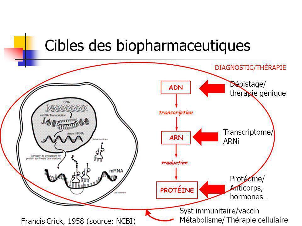 Cibles des biopharmaceutiques Francis Crick, 1958 (source: NCBI) traduction PROTÉINE ARN ADN Dépistage/ thérapie génique Transcriptome/ ARNi Protéome/ Anticorps, hormones… DIAGNOSTIC/THÉRAPIE Syst immunitaire/vaccin Métabolisme/ Thérapie cellulaire