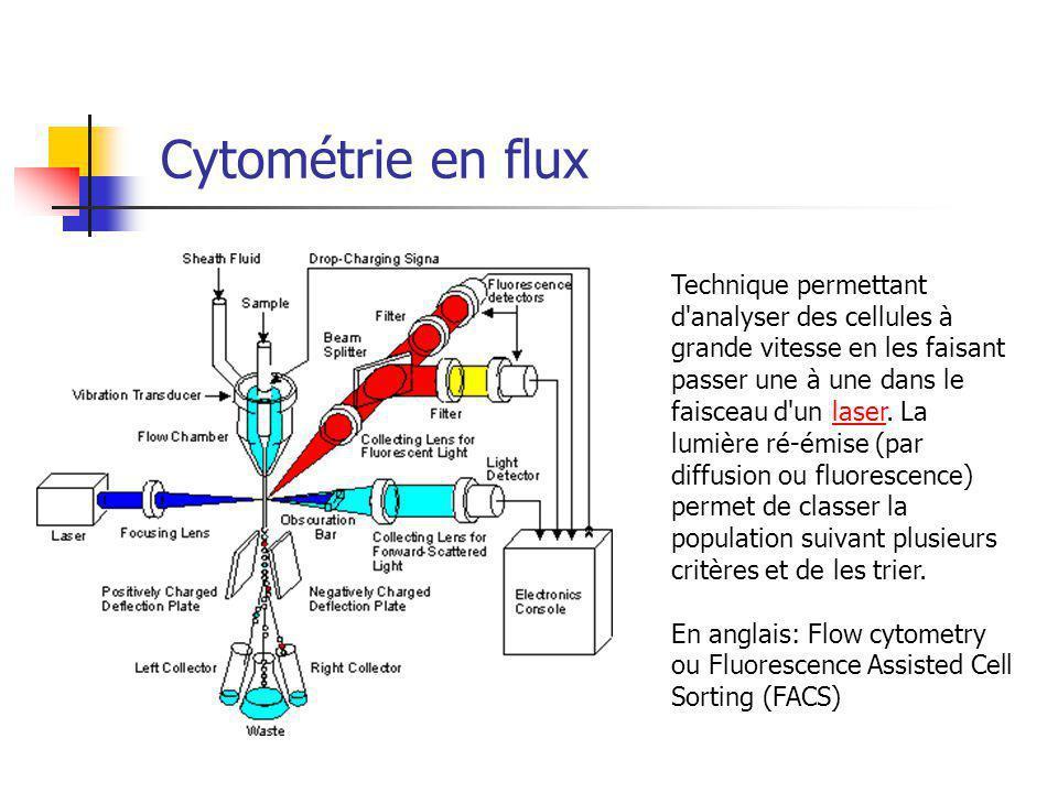 Cytométrie en flux Technique permettant d analyser des cellules à grande vitesse en les faisant passer une à une dans le faisceau d un laser.