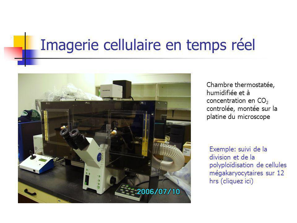 Imagerie cellulaire en temps réel Chambre thermostatée, humidifiée et à concentration en CO 2 controlée, montée sur la platine du microscope Exemple: suivi de la division et de la polyploïdisation de cellules mégakaryocytaires sur 12 hrs (cliquez ici)