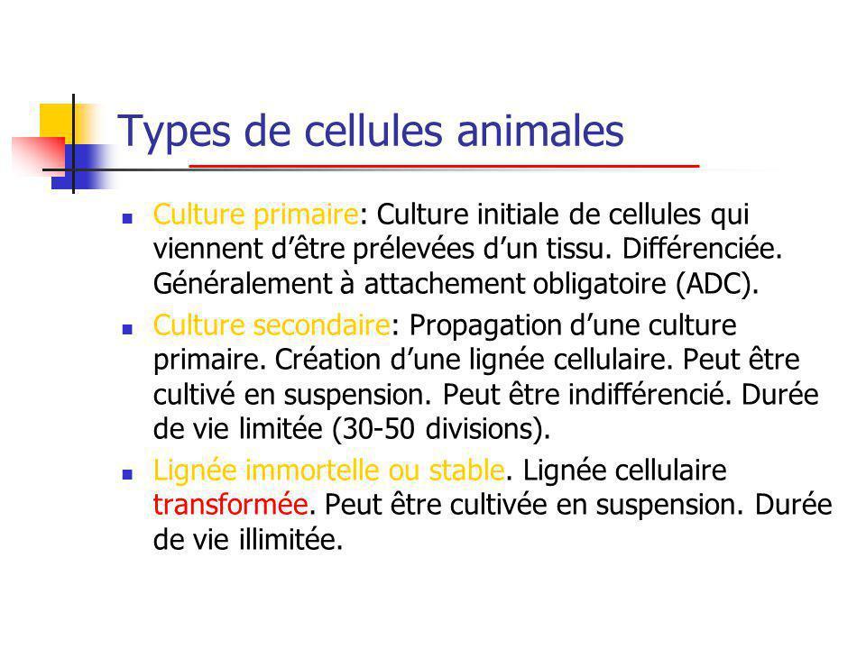 Types de cellules animales Culture primaire: Culture initiale de cellules qui viennent dêtre prélevées dun tissu.