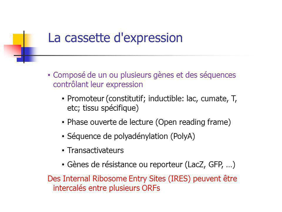 La cassette d expression Composé de un ou plusieurs gènes et des séquences contrôlant leur expression Promoteur (constitutif; inductible: lac, cumate, T, etc; tissu spécifique) Phase ouverte de lecture (Open reading frame) Séquence de polyadénylation (PolyA) Transactivateurs Gènes de résistance ou reporteur (LacZ, GFP, …) Des Internal Ribosome Entry Sites (IRES) peuvent être intercalés entre plusieurs ORFs
