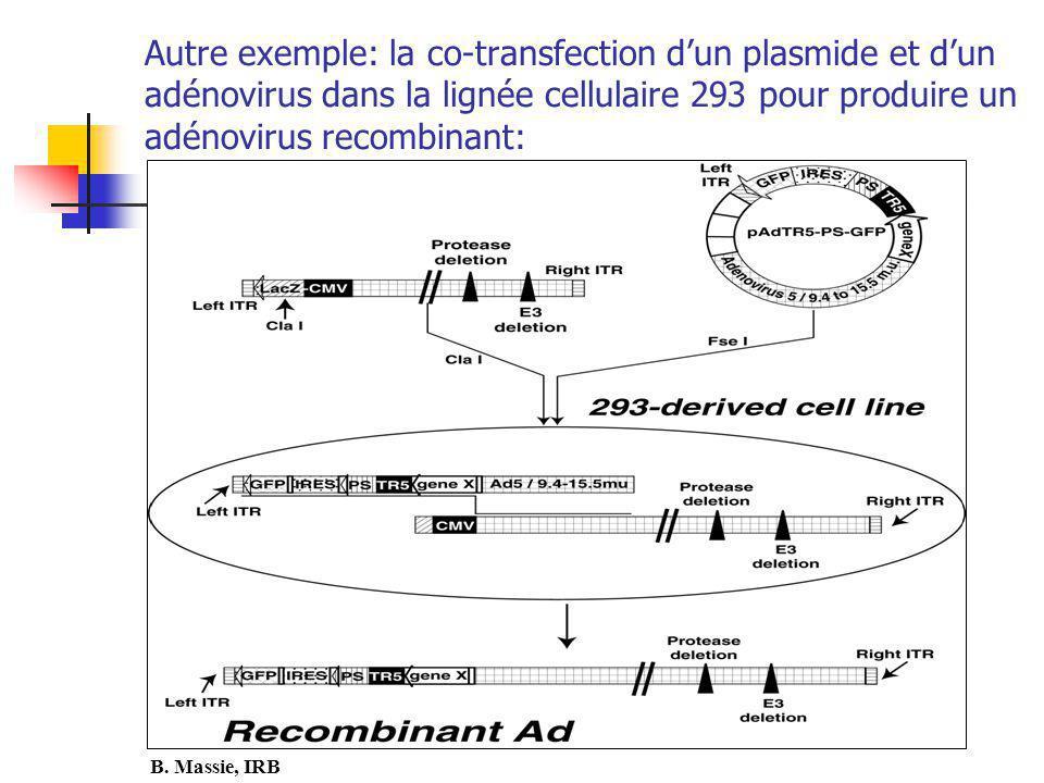 Autre exemple: la co-transfection dun plasmide et dun adénovirus dans la lignée cellulaire 293 pour produire un adénovirus recombinant: B.