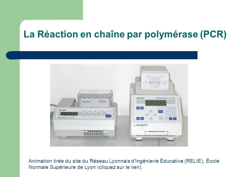 La Réaction en chaîne par polymérase (PCR) Animation tirée du site du Réseau Lyonnais d'Ingénierie Éducative (RELIE), École Normale Supérieure de Lyon