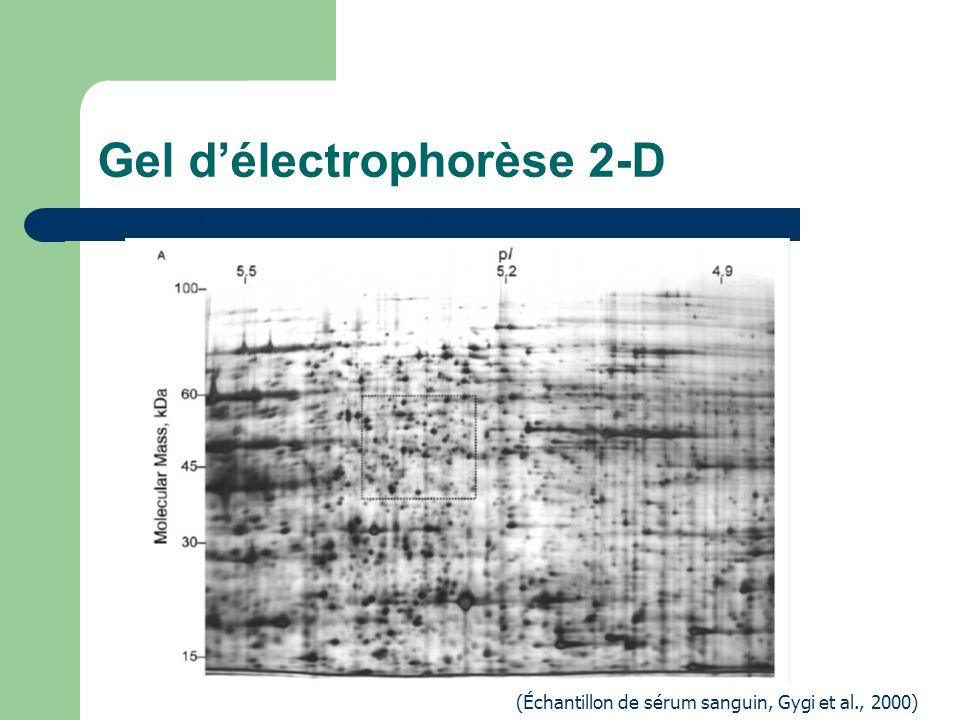 Gel délectrophorèse 2-D (Échantillon de sérum sanguin, Gygi et al., 2000) 2-DE des protéines soluble de levures