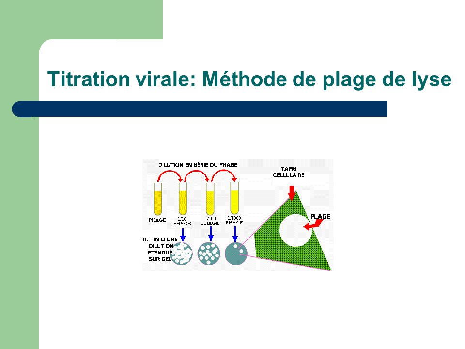 Titration virale: Méthode de plage de lyse