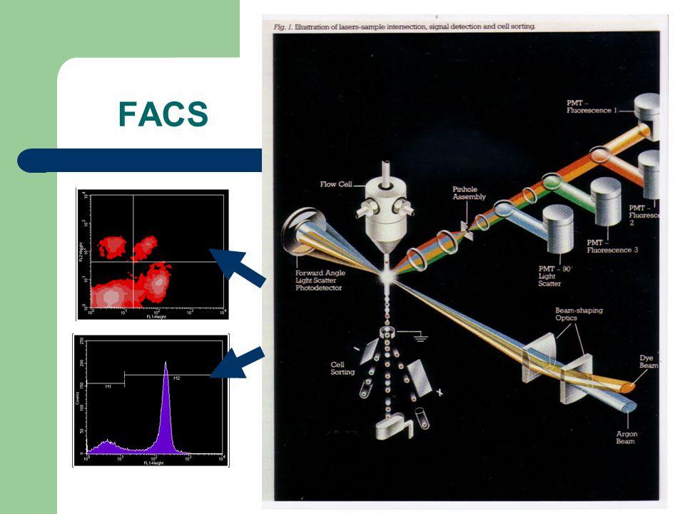 Expression génétique Biopuces (cliquez sur une des images pour lanimation)