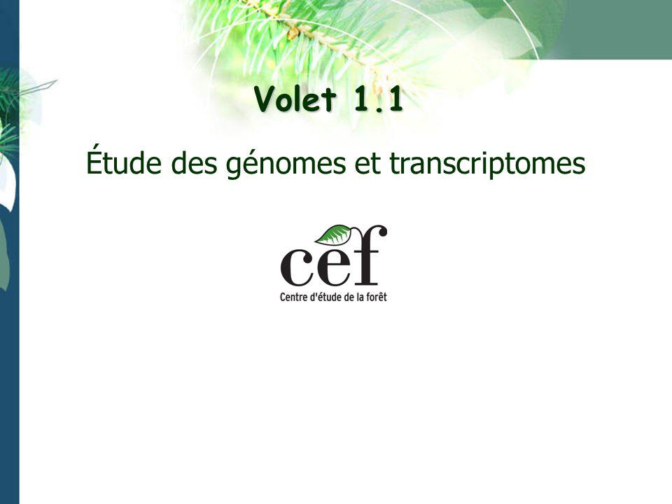 Résultats La structure phylogéographique a été déterminée pour quelques conifères à vaste distribution: pin gris, épinette noire, pin tordu dans lOuest canadien.