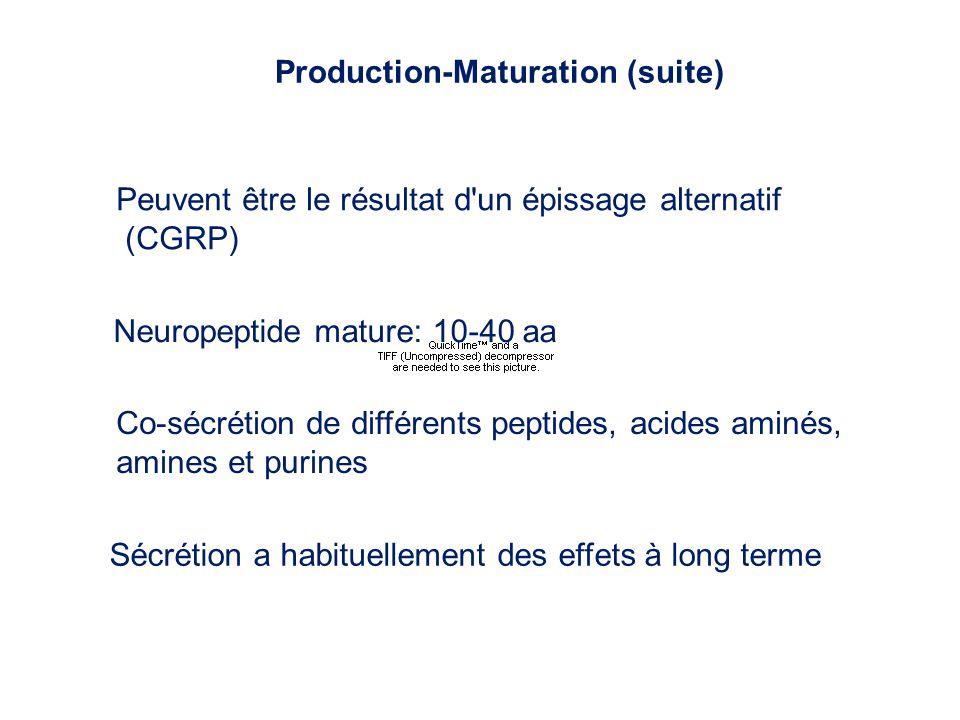 Production-Maturation (suite) Peuvent être le résultat d'un épissage alternatif (CGRP) Neuropeptide mature: 10-40 aa Sécrétion a habituellement des ef