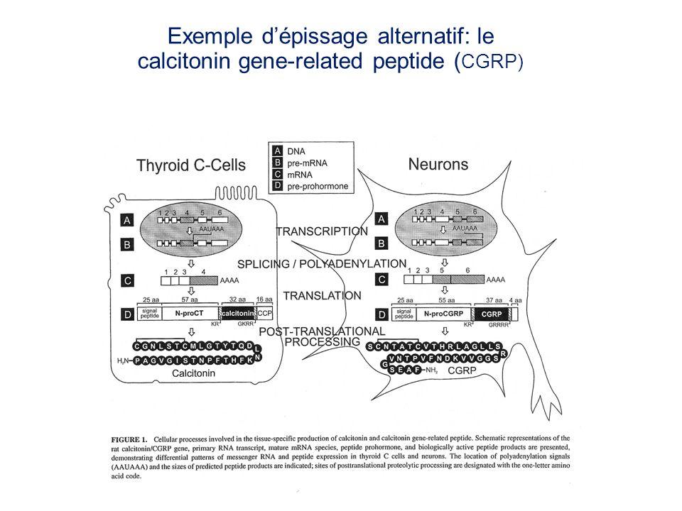 Exemple dépissage alternatif: le calcitonin gene-related peptide ( CGRP)