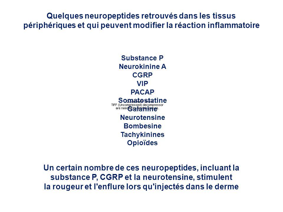 Quelques neuropeptides retrouvés dans les tissus périphériques et qui peuvent modifier la réaction inflammatoire Substance P Neurokinine A CGRP VIP PA