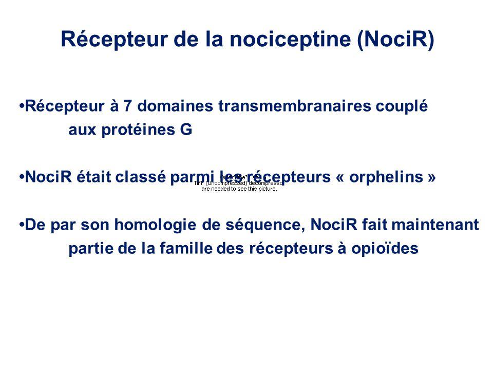 Récepteur à 7 domaines transmembranaires couplé aux protéines G NociR était classé parmi les récepteurs « orphelins » De par son homologie de séquence