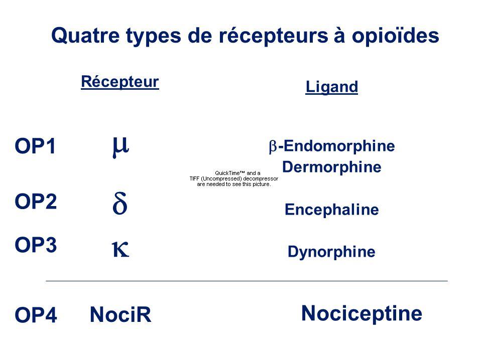 Quatre types de récepteurs à opioïdes Récepteur Ligand -Endomorphine Dermorphine Encephaline Dynorphine NociR Nociceptine OP1 OP2 OP3 OP4