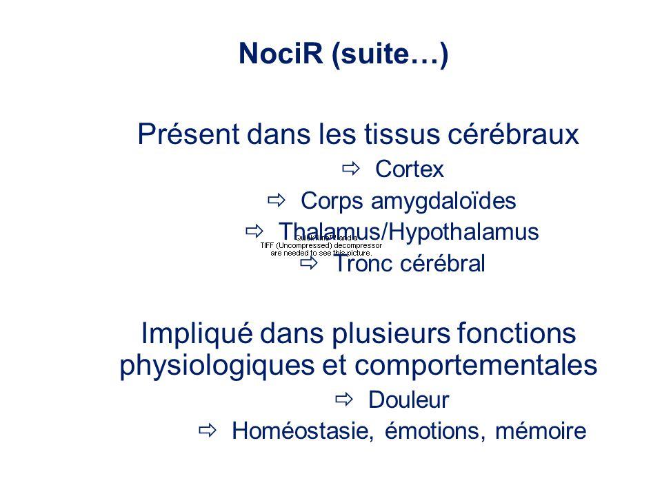 Présent dans les tissus cérébraux Cortex Corps amygdaloïdes Thalamus/Hypothalamus Tronc cérébral Impliqué dans plusieurs fonctions physiologiques et c